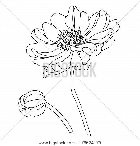 Graphical black flower illustration. black flower, contour flower, bloom flower, decorative flower, isolate flower, blossom flower, monochrome flower. Vector.