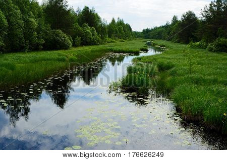 River with waterlilies flows through the meadow between the bushes