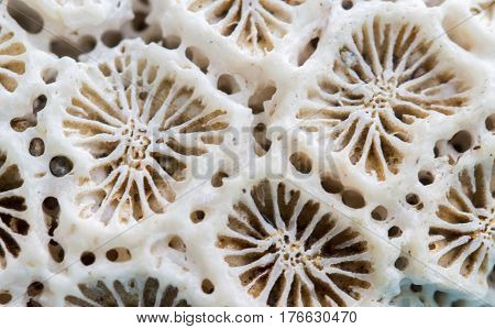 Coral texture macro photo. Ivory white coral structure closeup. Abstract macro background. Dead coral surface with structure elements for water filtration. Biological texture of natural sea coral
