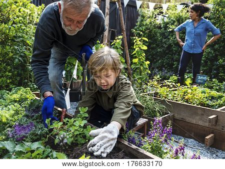 Family planting vegetable from backyard garden