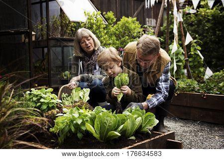 Family picking vegetable from backyard garden