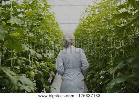 Woman Wearing Gown in Glasshouse Study Plants