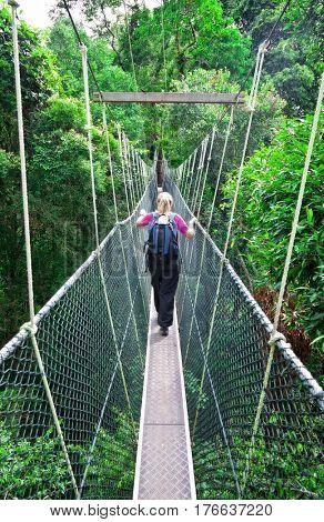 Rainforest Canopy Walkway Borneo Malaysia