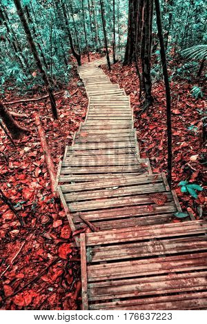 stair in borneo rainforest infrared filter image
