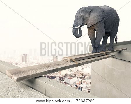 elephant try to walk on wood beam danger concept