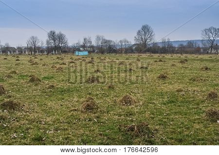 Mole burrows in the meadow near the village of Babin Average of Kalush district of Ivano-Frankivsk region of Ukraine. March 2007