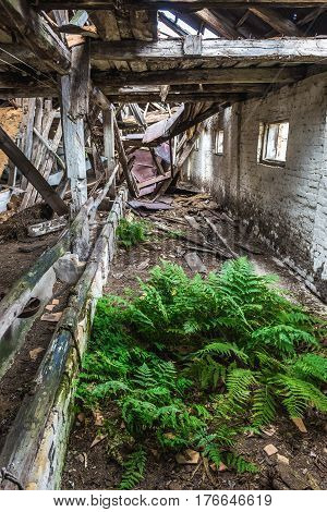 Ruins of pig house in former Soviet collective farm in abandoned Masheve settlement Chernobyl Exclusion Zone Ukraine