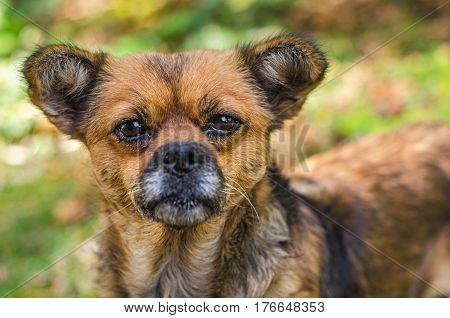 Portrait of sad hungry homeless dog. Dog begging for food.