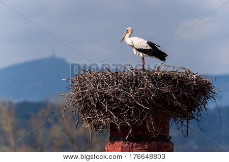 Stork sitting on a nest high on the chimney