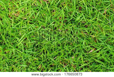 High green grass photo background. Green grass field background. Spring banner of fresh green grass. Grass image for backdrop or seasonal card. Summer land lawn. Playground area for summer sport