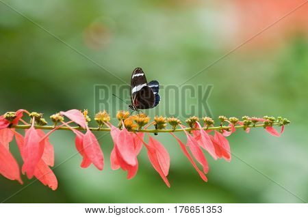 Butterfly in nature color image horizontal image