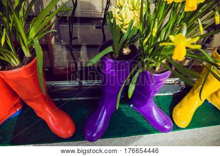 Yellow Daffodils And Hyacinth In Multicolored Rubber Boots Used As Pots Decorating The Storefront Wi
