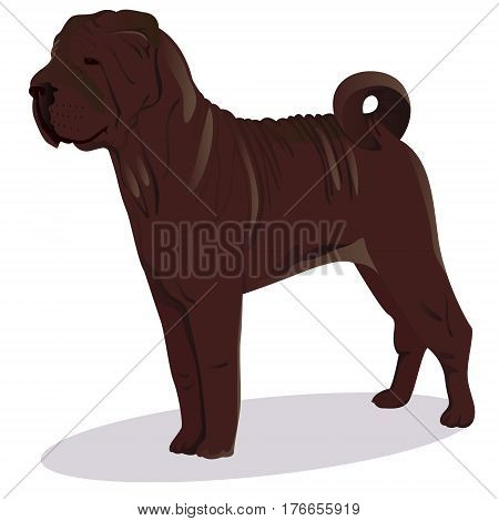 Chinese shar pei dog chocolate vector illustration