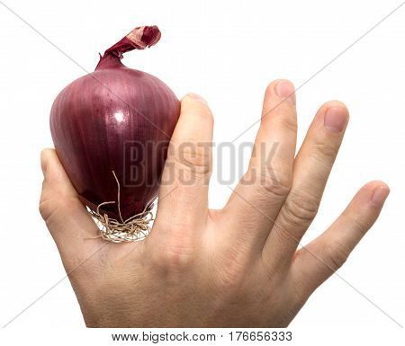 red onions in a hand on a white background .