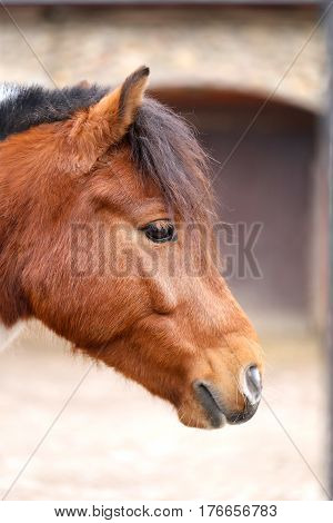 Portrait of beautiful red horse photographed in close-up
