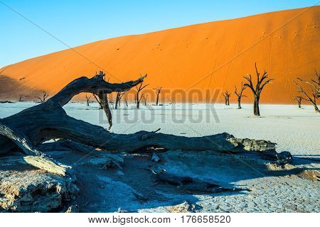 The bottom of dried lake Deadvlei, with dry trees. Ecotourism in Namib-Naukluft National Park, Namibia. The evening shadows