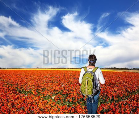 Woman - tourist with backpack admiring the floral field. Concept of rural and recreational tourism. The bright southern sun illuminates red garden buttercups