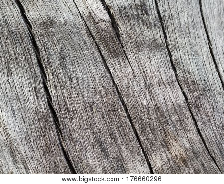 Cracked wood background in neutral color gamma. Weathered salted tree trunk macro photo. Beach tree texture with crack. Natural wood surface ornament. Obsolete grey timber from sea. Wooden cut closeup