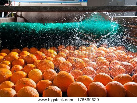 The Working Of Citrus Fruits