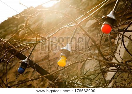 Light Bulbs Hanging On A Fixed Place