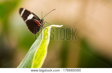 Colorful butterfly on a big leaf on green background