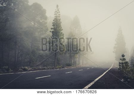 Empty Road In Foggy Forest Landscape -