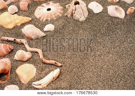 Sandy Beach Background of Seashells and Driftwood with room for copy