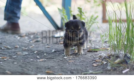 Small homeless puppy outdoors among cigarette butts - ecology concept, telephoto