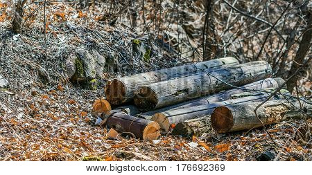 several logs stacked together laying on ground covered with leaves in a woodland park area in South Korea
