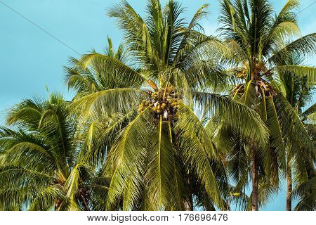Palm tree and sky tropical island photo. Exotic summer holiday. Tropical island nature. Palm tree leaf on sky background. Sunny green palm tree crown for vacation. Tropical landscape with palm tree