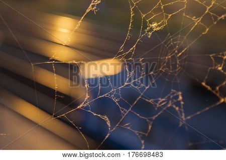 The Web Woven By The Spider In The Sunset