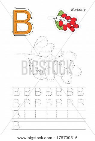 Vector illustrated worksheet to preschool children learn handwriting. Page to be traced for gaming and education with easy educational kid game level. Tracing worksheet for letter B. Barberry.