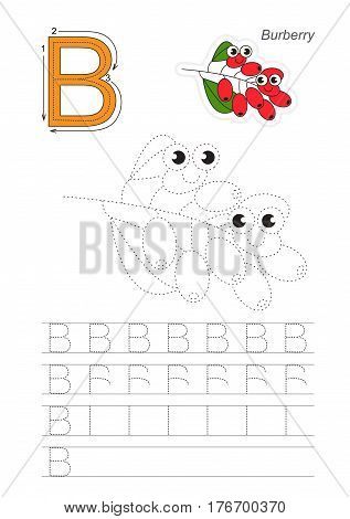 Vector illustrated worksheet to preschool children learn handwriting, the page to be traced for gaming and education with easy educational kid game level. Tracing worksheet for letter B, barberry.