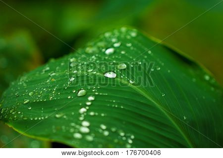 Water drop on green leaf. Garden plant leaf after the rain. Morning dew on plant leaf. Hydration for youth and freshness concept image for product package design or banner template. Exotic greenery