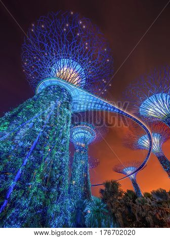 The Supertree and trees at Gardens by the Bay, Singapore