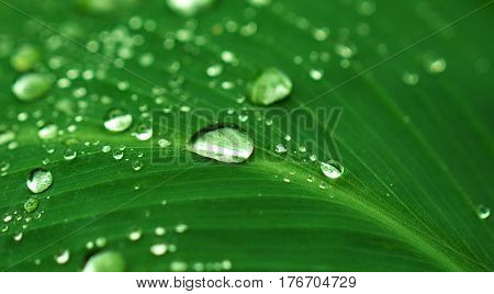 Rain drop on green leaf. Exotic garden after rain. Wet season in tropics. Tropical weather typhoon. Fresh wet leaf with water dust. Pure ecology of wild nature. Exotic island clean environment image