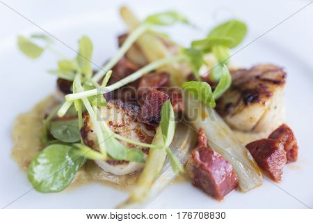 Seared scallops and chorizo sausage with watercress on a white plate