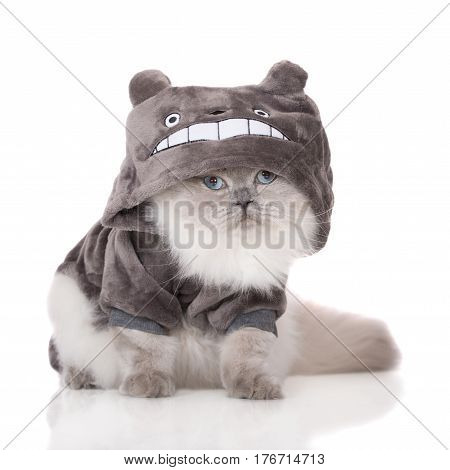 funny fluffy cat in a costume with a hood