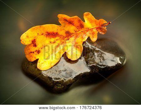 Fall Oak Leaf. Caught Rotten Old Oak Leaf On Stone In Blurred Water
