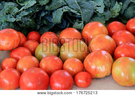 Long table covered in freshly picked tomatoes and leafy lettuce.