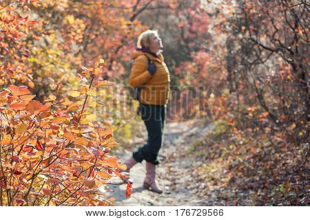 Woman in sporty or casual Clothing with small Backpack looking up and enjoying warm sunlights on weekend Walk in autumnal Forest with focus Tree. Person is blurred and unrecognisable