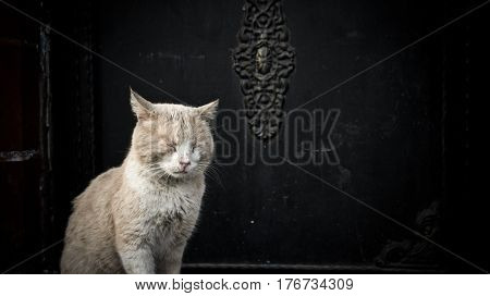 Istanbul, Turkey - March 25, 2012: Cat sleeping standing in front of a mosque door in Sultanahmet district