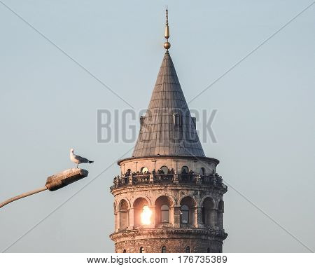 Istanbul, Turkey - February 18, 2017: A seagull resting on a lamp in front of Galata Tower in Galata district