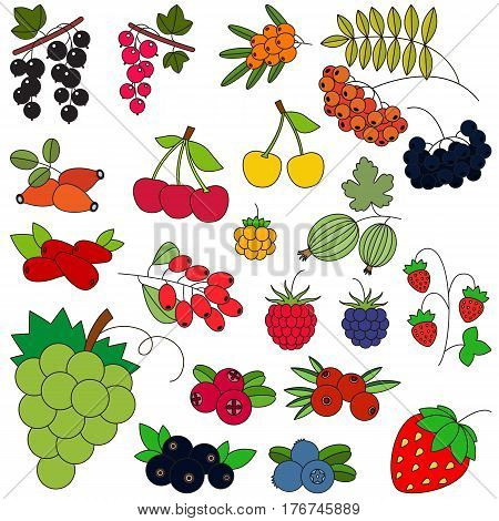 Berry set in vector, the colorful version.