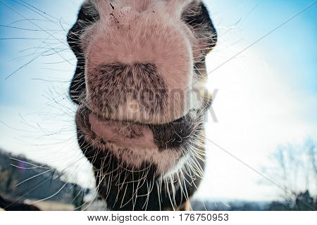 Close up horse face