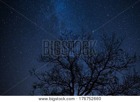 Night landscape with vibrant stars and tree. Night landscape. Space background. Galaxy. Wilderness wild nature