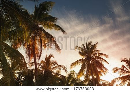Palms, Tropical Vacation Background