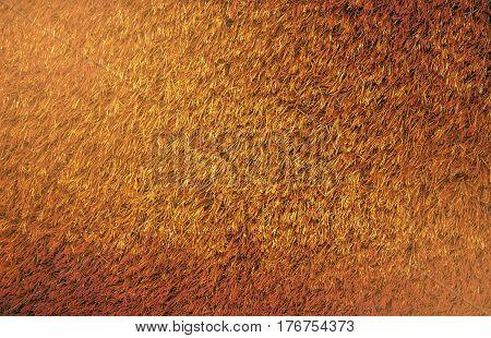 Brown grass background at Bangkok in Thailand