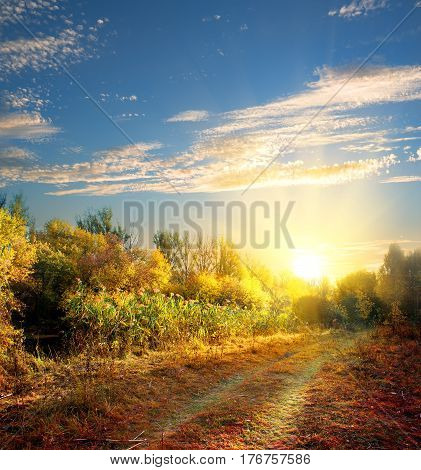 Country road in the colorful autumn forest