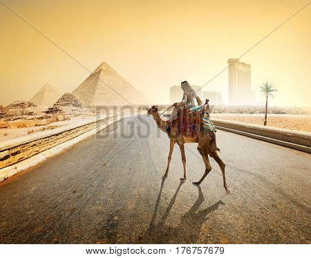 Bedouin and camel on asphalted road to Giza and pyramids